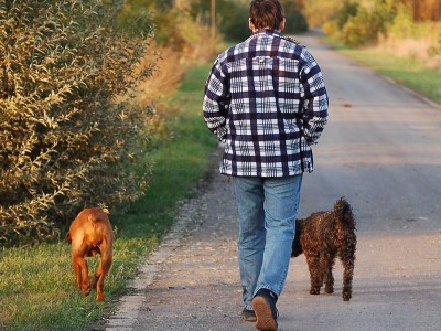 thumb_walking_with_dogs_1428689.jpg