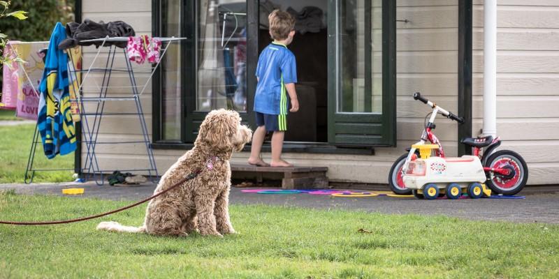 Camping-met-hond1.jpg