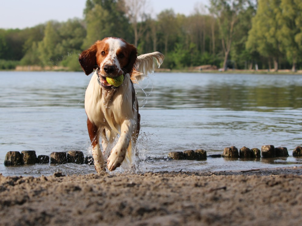 hond-recreatieplas.JPG